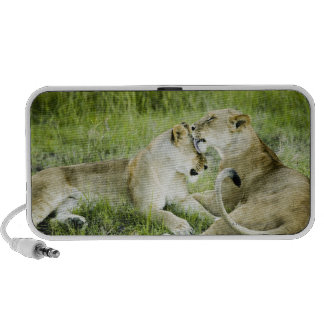 Lion and lioness, Africa 2 Laptop Speakers