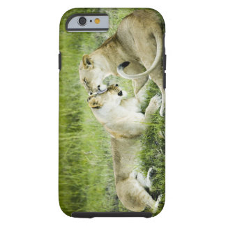 Lion and lioness, Africa 2 Tough iPhone 6 Case
