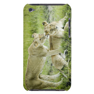 Lion and lioness, Africa Barely There iPod Cover