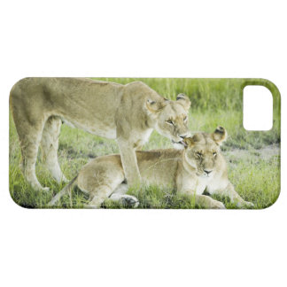 Lion and lioness, Africa Case For The iPhone 5
