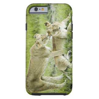 Lion and lioness, Africa Tough iPhone 6 Case