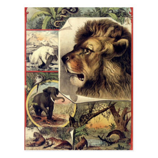 Lion and wild animals vintage circus show postcard