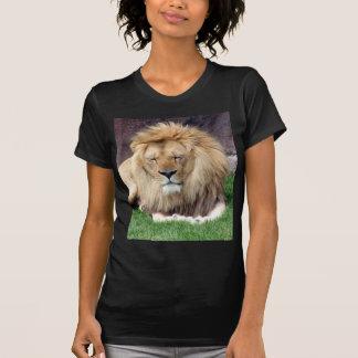 Lion Around T Shirts