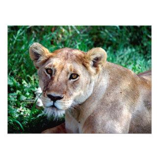 Lion Art Photo