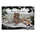 Lion at Christmas Card