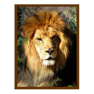 Lion at Leisure Postcard