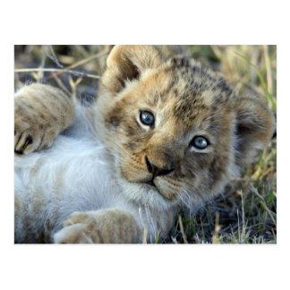 Lion baby postcard