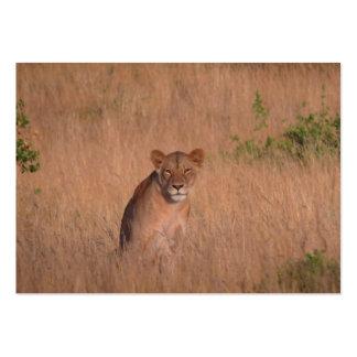 Lion Business Card