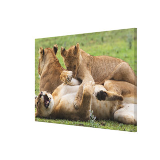 Lion Clubs Playing Canvas Print