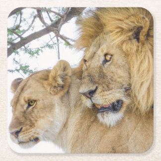 Lion Couple Coasters