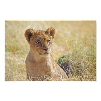 Lion Cub 1 Photo