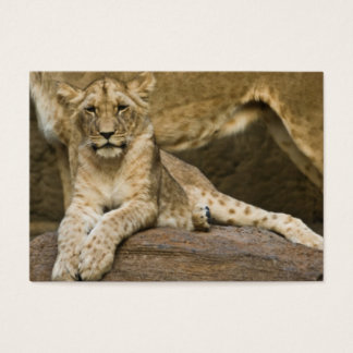 Lion Cub 2011 Pocket Calendar (UK) Business Card