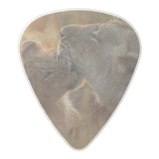Lion cub aged about 12 months playing acetal guitar pick