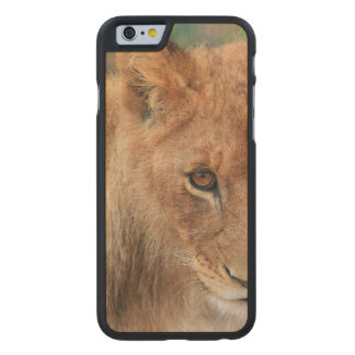 Lion Cub Carved Maple iPhone 6 Case