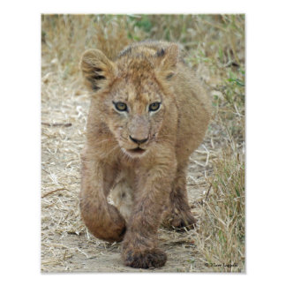 Lion Cub Close-up Photo