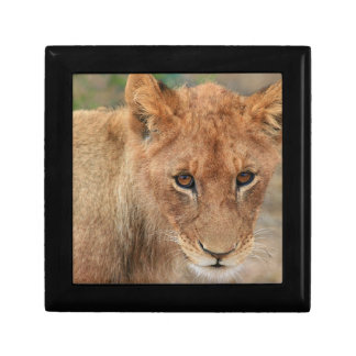 Lion Cub Gift Box