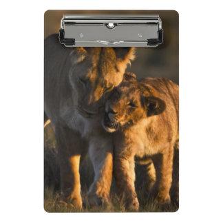 Lion cub greeting mother mini clipboard