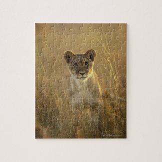 Lion Cub | Hwange National Park, Zimbabwe Jigsaw Puzzle