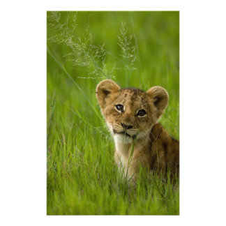 Lion Cub In The Tall Grass Custom Stationery