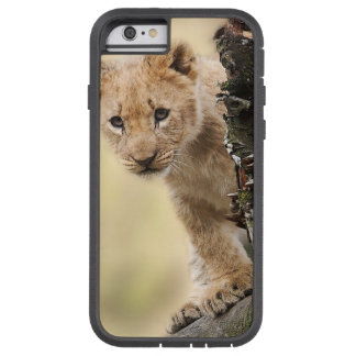 Lion Cub in Tree Cell Phone Case