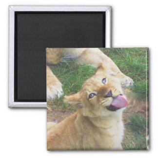 Lion Cub Magnet