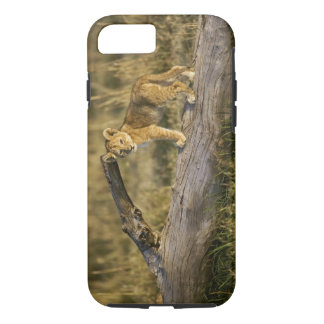 Lion cub on log, Panthera leo, Masai Mara, Kenya iPhone 8/7 Case