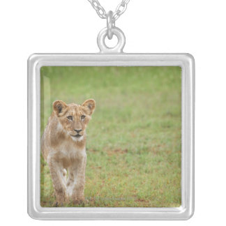 lion cub, Panthera leo, Kgalagadi Transfrontier Silver Plated Necklace