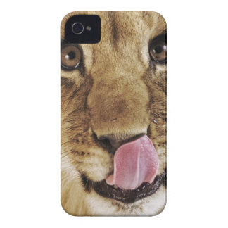 Lion cub (Panthera leo) licking nose, close-up iPhone 4 Case-Mate Case