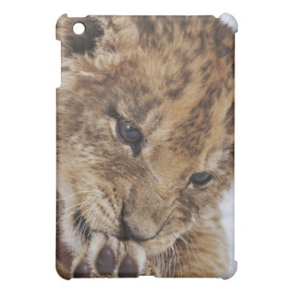 Lion cub (Panthera leo) licking paw, close-up iPad Mini Covers
