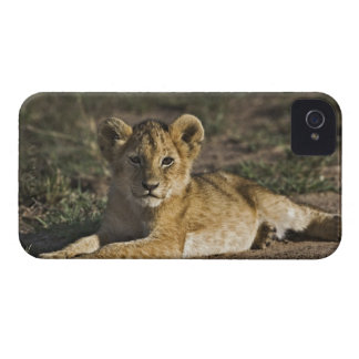 Lion cub, Panthera leo, lying in tire tracks, Case-Mate iPhone 4 Case
