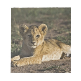 Lion cub, Panthera leo, lying in tire tracks, Notepad
