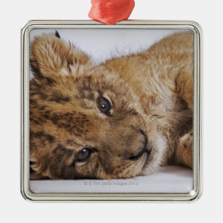 Lion cub (Panthera leo) lying on side, close-up Christmas Ornament