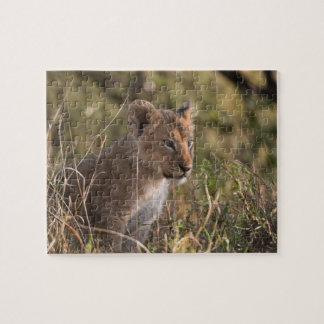 Lion cub (Panthera leo), Masai Mara National Jigsaw Puzzle