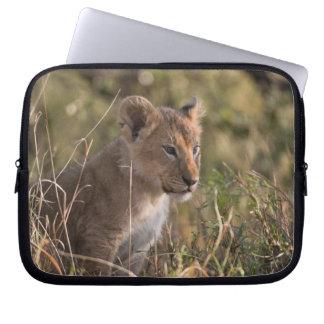 Lion cub (Panthera leo), Masai Mara National Laptop Sleeve