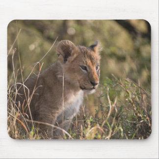 Lion cub (Panthera leo), Masai Mara National Mouse Mat