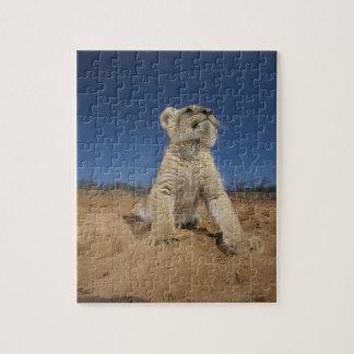 Lion Cub (Panthera Leo) sitting on sand, Namibia Jigsaw Puzzle