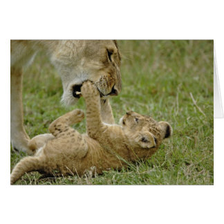 Lion cub playing with female lion, Masai Mara Greeting Card