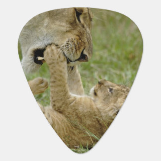 Lion cub playing with female lion, Masai Mara Plectrum