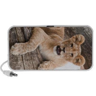 Lion cub portable speakers