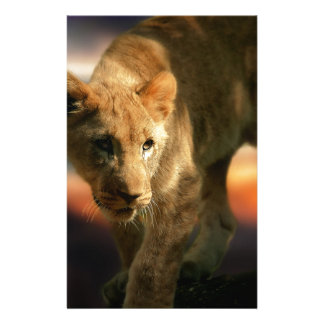 Lion Cub Stationery Design