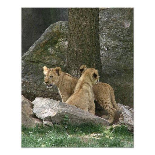Lion Cubs Exploring Photo