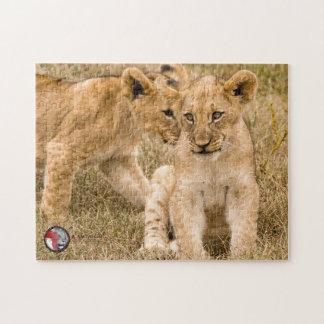 Lion cubs jigzaw puzzle, in support of CACH. Puzzles