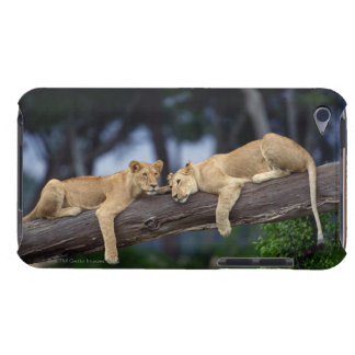 Lion cubs lying on tree branch , Kenya , Africa iPod Case-Mate Cases