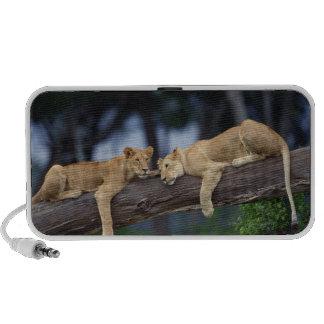 Lion cubs lying on tree branch , Kenya , Africa Travel Speakers