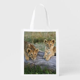 Lion cubs on log, Panthera leo, Masai Mara, 2