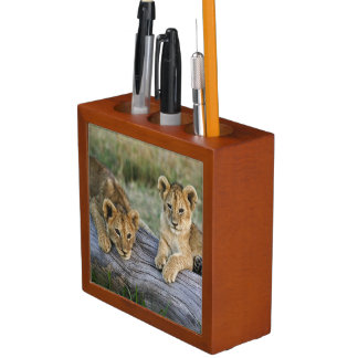 Lion cubs on log, Panthera leo, Masai Mara, 2 Desk Organiser