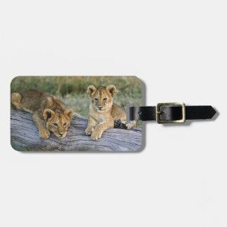 Lion cubs on log, Panthera leo, Masai Mara, 2 Luggage Tag