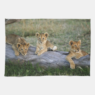 Lion cubs on log, Panthera leo, Masai Mara, 2 Tea Towel