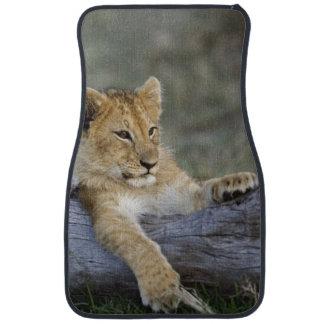 Lion cubs on log, Panthera leo, Masai Mara, Car Mat