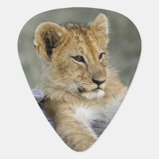 Lion cubs on log, Panthera leo, Masai Mara, Plectrum